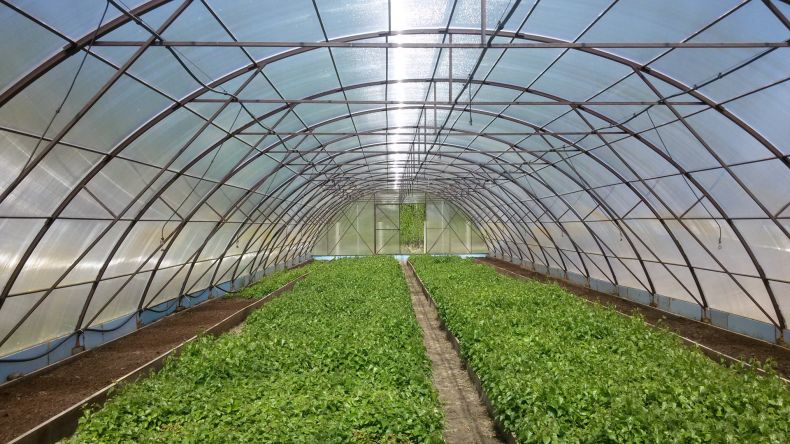 технология выращивания овощей в теплицах Pdf